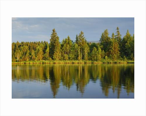 Moor lake by Corbis