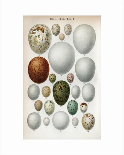 Scientific Illustration Of Various Eggs #2 by Corbis