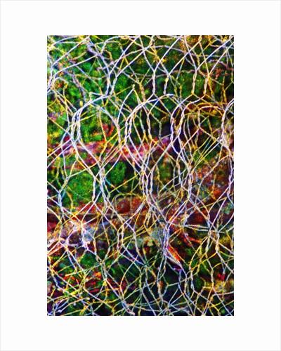 Wire Grid by Corbis