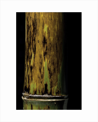 Phyllostachys nigra 'Boryana' (panther bamboo) by Corbis