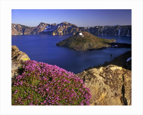 Penstemon blooms on cliff overlooking Wizard Island by Corbis