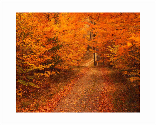Unpaved Road in Autumn by Corbis