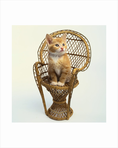 Kitten Sitting on Chair by Corbis