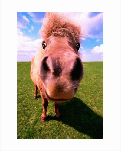 Pony's Nose by Corbis