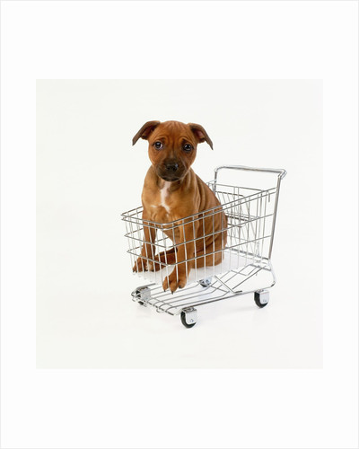 Puppy Sitting in Miniature Shopping Cart by Corbis