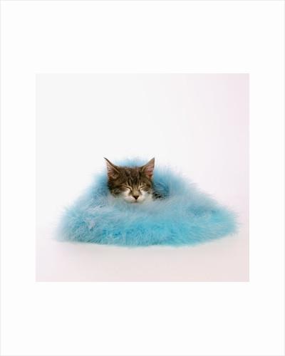 Kitten Sleeping in Feather Boa by Corbis