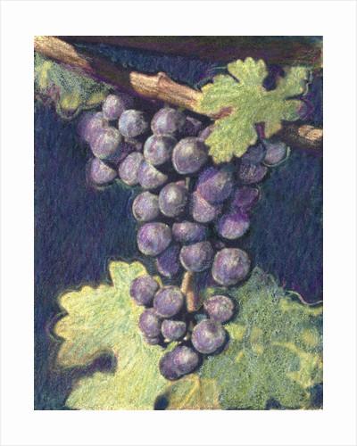 Cabernet Franc Cluster by Jennifer Kennard