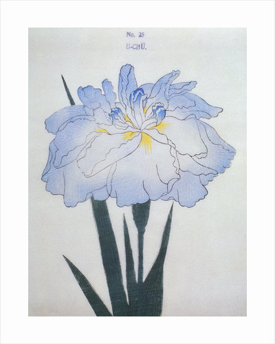 U-Chu Book Illustration of a Light Blue Iris by Corbis