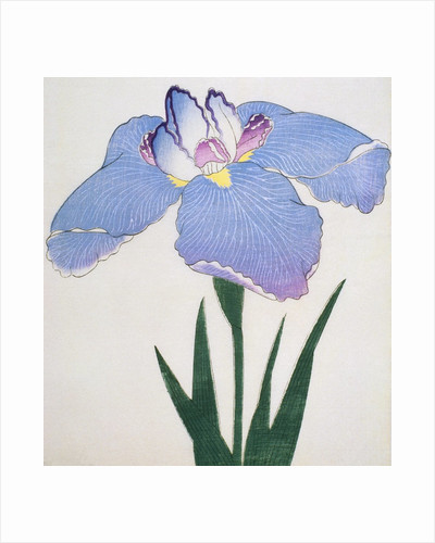 Kaku Jaku Ro Book Illustration of a Blue Iris by Corbis
