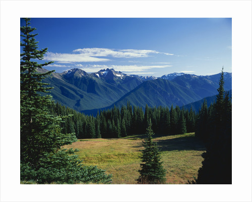 Gray Wolf Ridge by Corbis