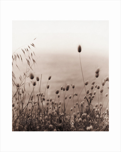 Grasses by the Ocean by Corbis
