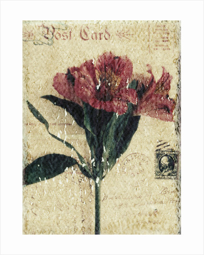 Postcard and Flower by Kim Koza