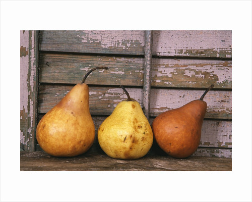 Studio-Pears by Kim Koza