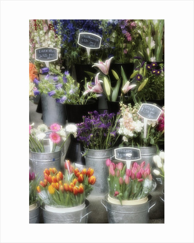 Flowers for Sale by Susan C. Rosenthal
