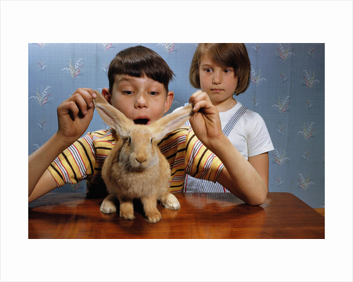 Annoying Brother Playing With His Sister's Pet Rabbit by Corbis