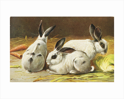 German Postcard Depicting Three Rabbits by Corbis