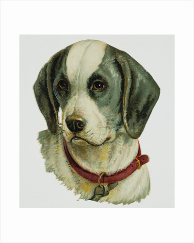 Illustration Depicting a Brown and White Dog by Corbis