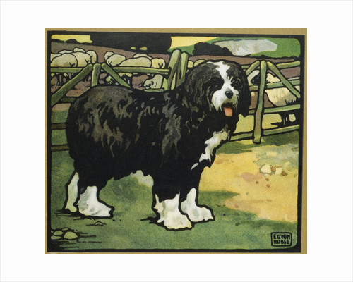 Illustration of an Old English Sheepdog by Edwin Noble