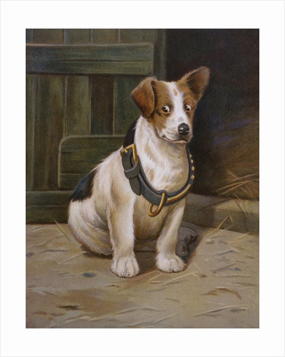 A Misfit Book Illustration of Jack Russell Terrier by Corbis