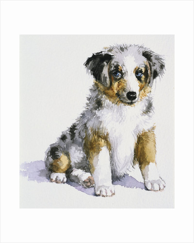 An Australian Shepherd Puppy from My Puppy's Record Book by Alexandra Day
