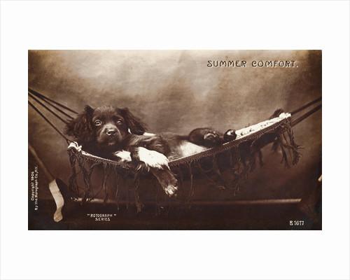 Summer Comfort Postcard by Corbis
