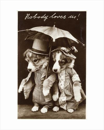 Nobody Loves Us! Photographic Postcard by Corbis