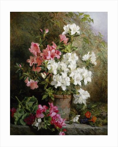 Still Life of Azaleas by Annie Feray Mutrie