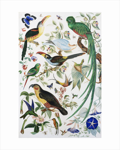 Exotic Parrots by School of John James Audubon