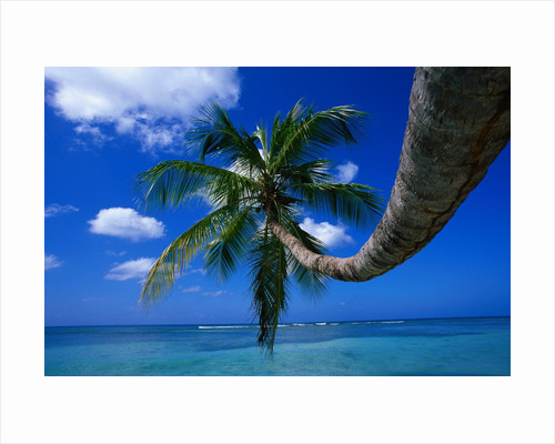 Palm Tree and Caribbean Sea by Corbis