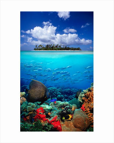 Underwater Scene in the Tropics by Corbis