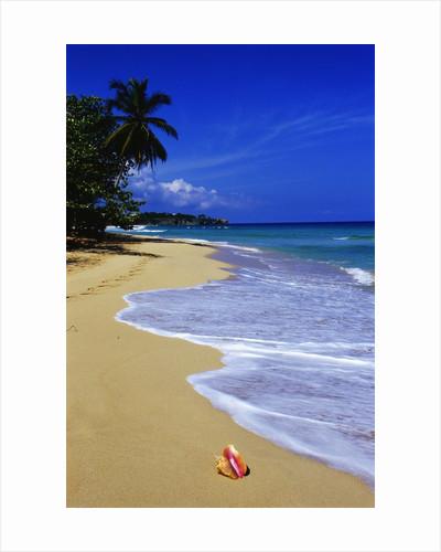 Conch Shell on Playa Grande Beach by Corbis