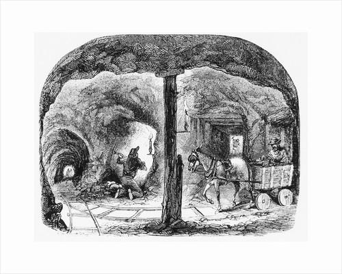Mule Pulls Cart Thru Ca Gold Mine: Illus by Corbis