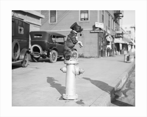 Dog Seated on Fire Hydrant by Corbis