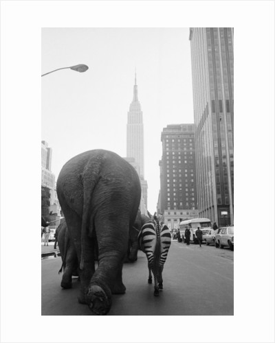 Circus Animals on 33rd Street by Corbis