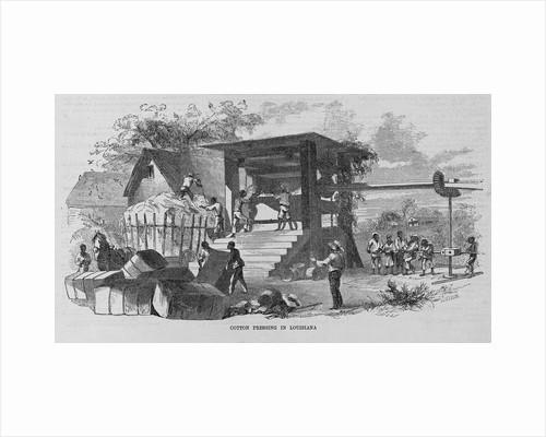 Cotton Pressing in Louisiana by Corbis