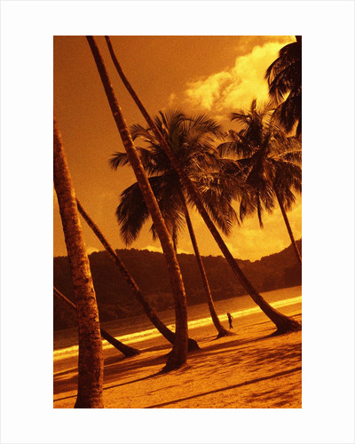 Palm Trees on Beach by Corbis