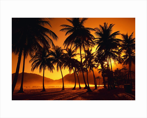 Palm Trees at Beach by Corbis