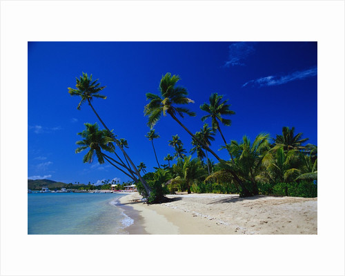 Palm Trees Growing at Beach by Corbis