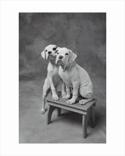 Two Dogs at Bench by Corbis