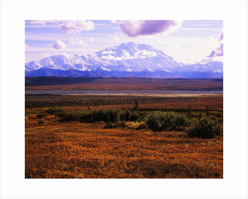 Red Vegetation and Mount McKinley by Corbis