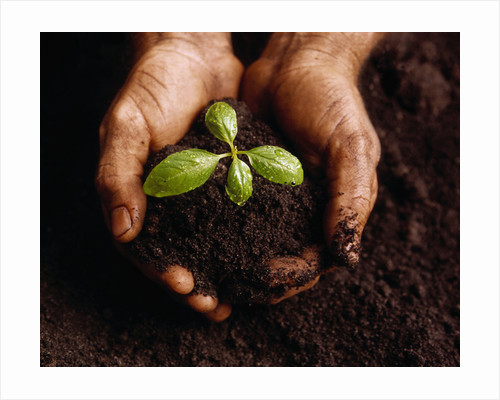Hands Holding a Seedling and Soil by Corbis