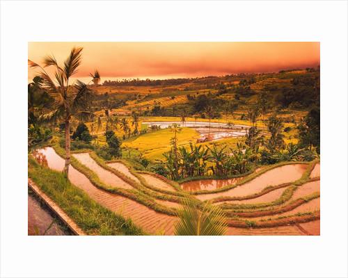 Terraces of Rice Fields by Corbis