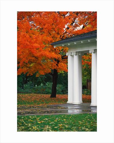 Autumn in a Milwaukee Park by Corbis