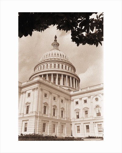 Branch Before U.S. Capitol by Corbis
