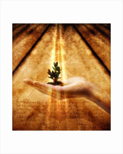 Hand Holding Seedling by Corbis