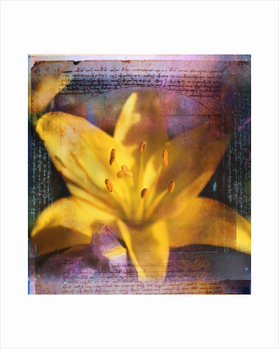 Yellow Lily and Text by Corbis