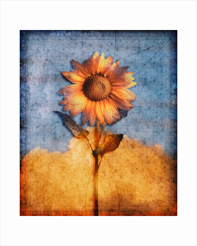 Sunflower and Sky by Corbis