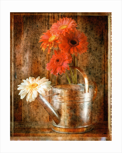 Gerbera Daisies in a Watering Can by Corbis