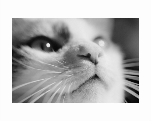 Close-up of Cat's Face by Corbis