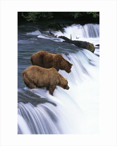 Wildlife Posters Wildlife Prints